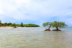 Cayo Jutias i det nordvästligt av Kuban Arkivfoton