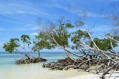 Cayo Jutias mangrove Royalty Free Stock Photography