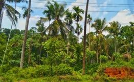 cayo kokosowy Cuba Guillermo drzewo Obraz Royalty Free