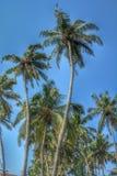 cayo kokosowy Cuba Guillermo drzewo zdjęcia stock