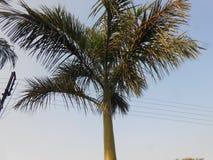 cayo kokosowy Cuba Guillermo drzewo fotografia stock