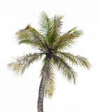 cayo kokosowy Cuba Guillermo drzewo ilustracja wektor