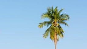 cayo kokosowy Cuba Guillermo drzewo Zdjęcie Royalty Free