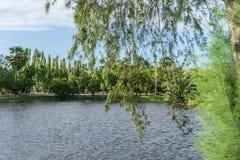 cayo kokosowy Cuba Guillermo drzewo zdjęcia royalty free