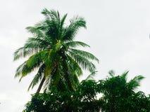 cayo kokosowy Cuba Guillermo drzewo Obrazy Stock