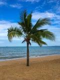 cayo kokosowy Cuba Guillermo drzewo Fotografia Royalty Free
