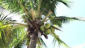 cayo kokosowy Cuba Guillermo drzewo Obrazy Royalty Free