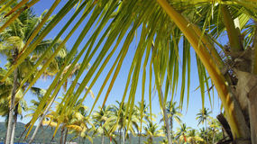 Cayo levantado island Stock Image