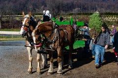 Caza del árbol de navidad Fotos de archivo