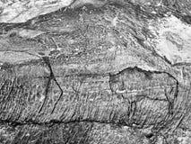 Caza del búfalo Pintura de la caza humana en la pared de la piedra arenisca, imagen prehistórica Fotos de archivo