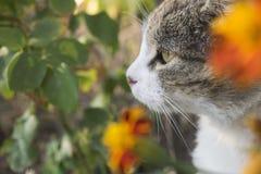 Caza del gato a través de la hierba y de flores Imagen de archivo libre de regalías