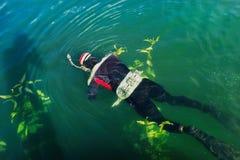 Caza subacuática en el lago del ` de Uvildy del ` en los Urales meridionales fotografía de archivo libre de regalías