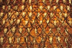 Caza Trophys de los ciervos Foto de archivo libre de regalías