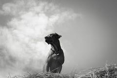cazador Fotografía de archivo