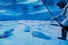 Cazador mientras que mata al sello en el ártico fotografía de archivo libre de regalías