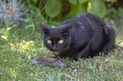 Cazador orgulloso del gato negro, ratón muerto en la hierba, bestia oscura feliz imagenes de archivo