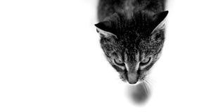Cazador silencioso Fotos de archivo