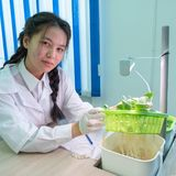 2019-09-01, Cazaquistão, Kostanay hydroponics Laboratório da escola A menina mostra brotos do abobrinha com raizes Plantas verdes fotografia de stock