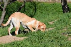 Cazas del perro para las ardillas Imagen de archivo