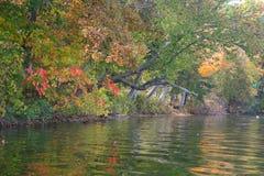 Cazenovia See Autumn Shoreline Lizenzfreie Stockfotos