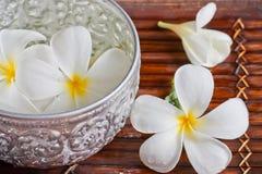 Cazo de la flor y del agua del Frangipani Imágenes de archivo libres de regalías