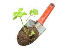 Cazzuola e pianta di giardinaggio su un isolato. Fotografia Stock