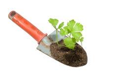Cazzuola e pianta di giardinaggio su un isolato. Immagini Stock
