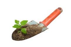 Cazzuola e pianta di giardinaggio su un isolato. Fotografia Stock Libera da Diritti