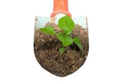 Cazzuola e pianta di giardinaggio su un isolato. Fotografie Stock Libere da Diritti