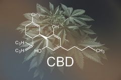 CBD惯例cannabidiol cannabinoids和健康,医疗大麻,大麻产业,despancery事务 向量例证