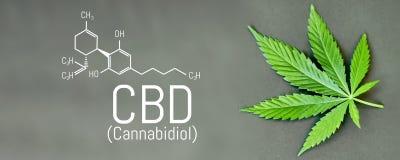 CBD-cannabisformule CBD-het uittreksel van de oliecannabis, medisch hennepconcept vector illustratie