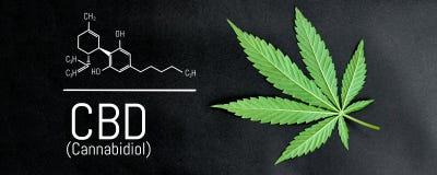 CBD-cannabisformule CBD-het uittreksel van de oliecannabis, medisch hennepconcept stock illustratie