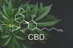 CBD-Formel cannabidiol E cannabinoids und Gesundheit, medizinisches Marihuana lizenzfreies stockbild