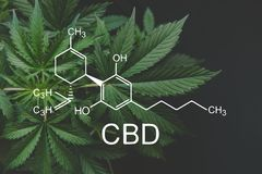 CBD formula cannabidiol. Hemp industry, Growing Marijuana, despancery business. cannabinoids and health, medical marijuana. CBD formula. Hemp industry, Growing royalty free stock image