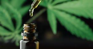 CBD hemp oil in a droplet with marijuana plant