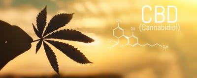 CBD marihuany formuła CBD oliwią marihuana ekstrakt, medyczny konopiany pojęcie royalty ilustracja