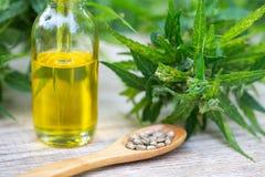 CBD oil cannabis extract, Hemp oil bottles and hemp flowers on a wooden table,  Medical cannabis concept. CBD oil cannabis extract, Hemp oil bottles and hemp royalty free stock photography