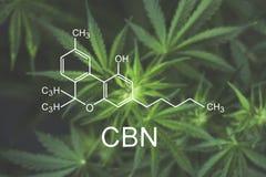 CBN de chemische formulecannabis bloeit bij het begin van het bloeien dichte omhooggaande hoogste mening Royalty-vrije Stock Afbeelding