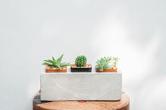 Ccactus in pots closeup with nature light on white wall backgrou Stock Photo
