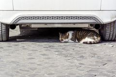 Cat sleeping under a white car royalty free stock photo
