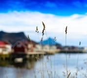 CCB vibrant vif horizontal de fond de montagne de fjord de bokeh de seigle images libres de droits