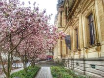 the cci building in The spring, Lyon old town,  France Royalty Free Stock Image