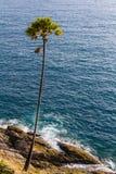 Ccoconut gömma i handflatan nära havet Fotografering för Bildbyråer