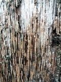 Cconut wood texture. Coconut wood texture Stock Photos