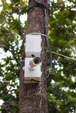 CCTV Camera. On a tree Stock Image