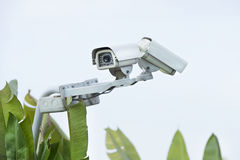 Cctv on in garden stock photo