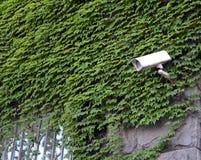 Cctv-kamera på stadsväggen Royaltyfria Foton