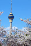 Cctv tower at spring  Royalty Free Stock Image