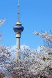 Cctv tower at spring  Royalty Free Stock Image