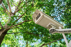 CCTV under trees Royalty Free Stock Photo